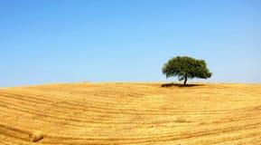 Alentejo, Portugal. Typical landscape of the Plain of the Alentejo stock image