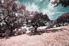 Alentejo,Portugal. Campos Agriculas alentejanos,Europa,Portugal Stock Images