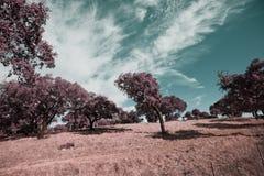 Alentejo,Portugal. Campos Agriculas alentejanos,Europa,Portugal Royalty Free Stock Photography
