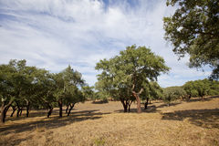 Alentejo,Portugal Royalty Free Stock Images