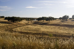 Alentejo region Royalty Free Stock Photo