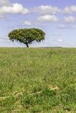 Alentejo region typical fields landscape, Portugal. Stock Photography