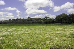 Alentejo region typical fields landscape, Portugal. Stock Image