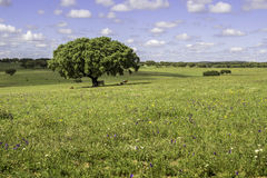 Alentejo region typical fields landscape, Portugal. Royalty Free Stock Photography