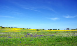 Alentejo  at Spring time Royalty Free Stock Photo