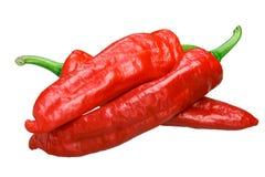 Aleppo pepper, fresh overripe whole pods. Aleppo pepper Capsicum annuum, fresh overripe whole pods stock image