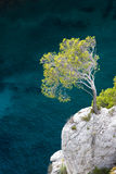 Aleppo pine, Calanques. Calanques between Cassis and Marseille, Provence royalty free stock photography