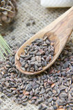 Aleppo pine seeds Royalty Free Stock Photos