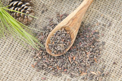 Aleppo pine seeds Royalty Free Stock Image