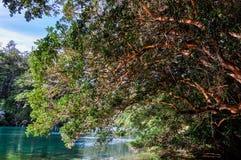 Alerces国家公园,阿根廷 库存照片