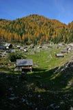 Alerces del otoño de Triglav NP y casas de madera Fotografía de archivo