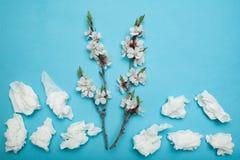 Alergia al florecimiento, concepto Rama de florecimiento y servilletas usadas nasales en fondo azul imagen de archivo