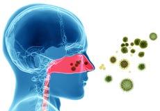 Alergia del polen/fiebre de heno ilustración del vector