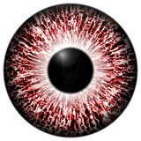 Alergic eye 3d red texture with black fringe. And lines Stock Photo