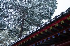 Aleros chinos que nievan 2 Foto de archivo