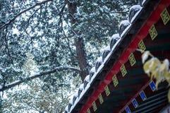Aleros chinos que nievan Foto de archivo libre de regalías