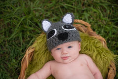 Alert Baby Boy Wearing a Raccoon Costume Royalty Free Stock Images