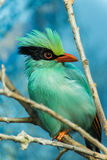 Colorful Bird Royalty Free Stock Images