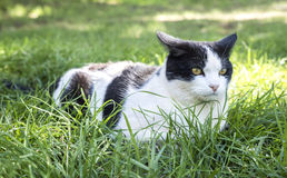 Alert Black and White Cat Stock Photography