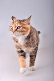 Alert cat. Stand on white background royalty free stock photos