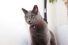 Alert Cat Royalty Free Stock Images