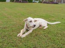 Alert Dog Stock Images