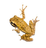 Alert frog on a white background Stock Images