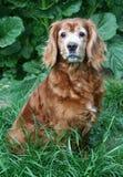 alert hund royaltyfri bild