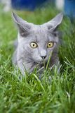 Alert kitten royalty free stock image