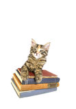 Alert Kitten on Old Books. Kitten looking alert leaning on pile of old books. Isolated on white Stock Images