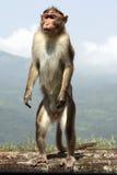 Alert Monkey Stock Image
