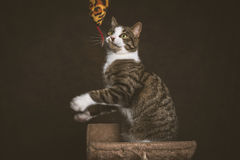 Alert playful young tabby cat with white chest sitting on scratching post against dark fabric background. Royalty Free Stock Image