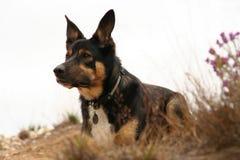 Alert sittande hund royaltyfri fotografi