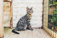 Alert striped grey tabby cat sitting watching Stock Photo
