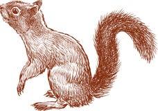 Alerte eekhoorn Royalty-vrije Stock Afbeeldingen