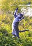 Alerte grappige gestreepte kat die op een groene weide springen die zich bevinden royalty-vrije stock foto