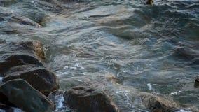 Alesaje de marea Usted puede ver patos salvajes almacen de metraje de vídeo