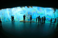 Alesund-acquarium Lizenzfreies Stockfoto