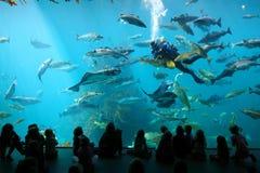 Alesund-acquarium Lizenzfreie Stockbilder
