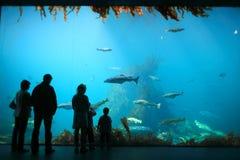 Alesund acquarium Royalty Free Stock Photo