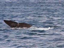 Aleta de cola de la ballena Foto de archivo libre de regalías
