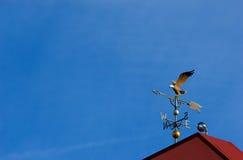 Aleta de tempo da águia Fotos de Stock Royalty Free