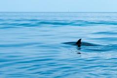 Aleta de um tubarão Fotos de Stock Royalty Free