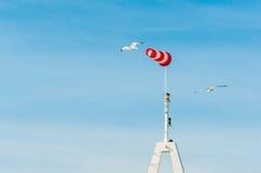 Aleta de vento horizontalmente de voo do windsock com o céu azul no fundo Gaivotas grandes dos pássaros que voam ao redor Foto de Stock Royalty Free