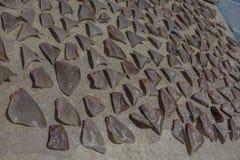 Aletas del tiburón Fotografía de archivo