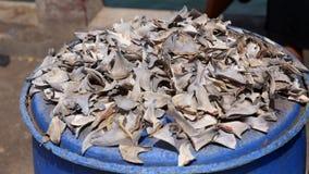 Aletas del tiburón en el mercado de pescados foto de archivo libre de regalías