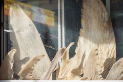 Aletas do tubarão na exposição foto de stock