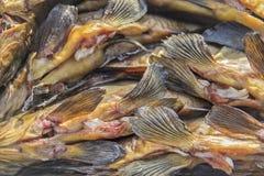 Aletas fumado dos peixes Imagem de Stock Royalty Free