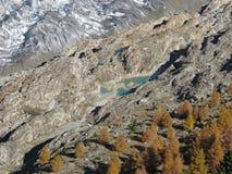Aletsch冰川和五颜六色的落叶松属森林 库存照片
