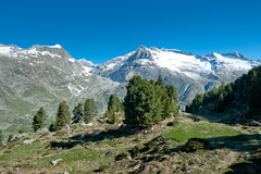 Aletsch forest. At Riederfurka, Riederalp, Wallis, Switzerland. This forest is part of the unesco world heritage royalty free stock image